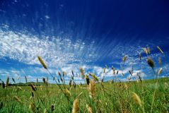Beautiful sky and grass Royalty Free Stock Images