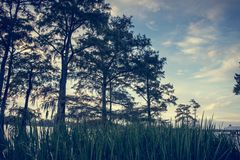 Grass and trees along Lake Bruin in St. Joseph Louisiana. Beautiful sky and grass and trees along Lake Bruin in St. Joseph Louisiana Royalty Free Stock Image