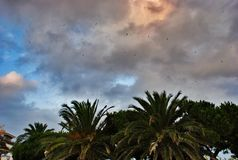 Beautiful sky and many palm trees in Cambrils Spain Royalty Free Stock Photo