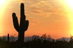 Beautiful sky over the desert Royalty Free Stock Image