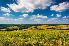 Beautiful sky over farm fields and rolling hills in rural York C Stock Images