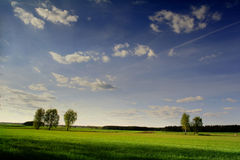 Beautiful sky over the meadow Royalty Free Stock Image