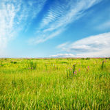 Beautiful sky and summer fields Royalty Free Stock Images