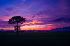 Beautiful sky sunset and alone tree in the meadow royalty free stock images