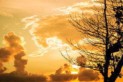 Beautiful sky in sunset with silhouette tree branches in tropical country Stock Photography