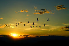 Beautiful sky on sunset or sunrise with flying birds natural bac Royalty Free Stock Images
