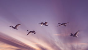 Beautiful sky on sunset or sunrise with flying birds natural bac Royalty Free Stock Photography