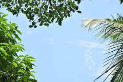 Beautiful sky with tree leaves border Royalty Free Stock Photo