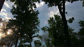 Beautiful sky and treetops. Summertime stock video