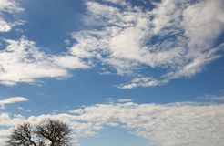 Beautiful skyscape. Beautiful sunny skyscape with fuffy clouds and tree crown on the bottom side Royalty Free Stock Images