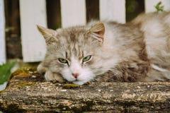 Beautiful sleepy cat lying on the bench outdoor Royalty Free Stock Photo