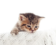 Beautiful sleepy tabby kitten Royalty Free Stock Images