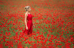 Beautiful and slim woman in red dress and field Royalty Free Stock Image