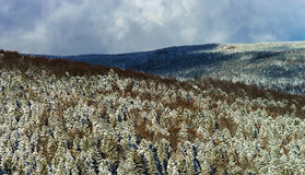 Beautiful slope of hill with winter trees in snow Royalty Free Stock Photography