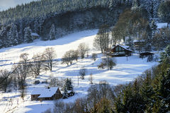 Beautiful slope of hill with winter trees in snow Stock Image