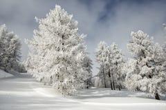 Beautiful slope ski stock image