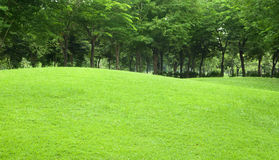 Beautiful sloping backyard with grass and tree in Stock Photo