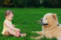 Beautiful small baby girl looking at dog. Beautiful small baby girl looking on big funny dog sitting on green grass and holding foot outdoors on summer Stock Image