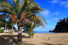 Beautiful small bay in Ibiza. Stock Photography