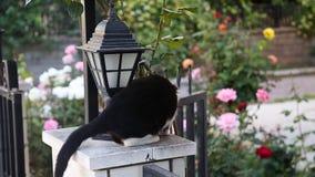 Beautiful small cat staring stock video