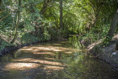 Beautiful small creek surrounded by green trees Stock Photography