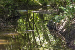 Beautiful small creek surrounded by green trees Stock Images