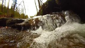 Beautiful small creek in a wonderful forest stock video footage