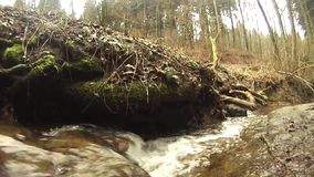 Beautiful small creek in a wonderful forest stock footage
