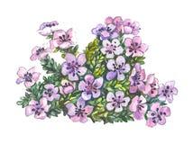 Beautiful small flowers Stock Photo