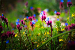 Beautiful small flowers growing in a meadow in spring Royalty Free Stock Photos