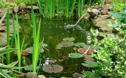 Free Beautiful Small Garden Pond With A Frog-shaped Fountain And Stone Shores In Spring. Selective Focus Stock Image - 158276451