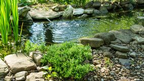 Free Beautiful Small Garden Pond With Frog-shaped Fountain And Stone Shores. Original Creeping Juniperus Procumbens Nana On Stones By P Stock Photography - 194419642