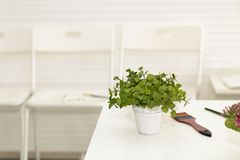 Beautiful small green pot plant and paintbrush on living room. Copy space white background.Copy space stock photo