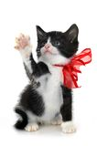 Beautiful small kitten Stock Image