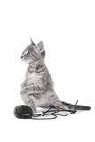 Beautiful small kitten plays with the computer mouse Stock Photos