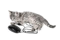 Beautiful small kitten plays with the computer mouse Stock Photo