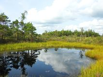 Beautiful small lake in Aukstumalos swamp, Lithuania Royalty Free Stock Image