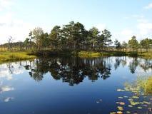 Beautiful small lake in Aukstumalos swamp, Lithuania Stock Image