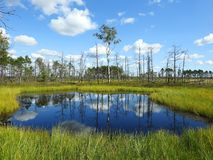 Beautiful small lake in Aukstumalos swamp, Lithuania Royalty Free Stock Photos