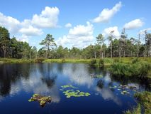 Beautiful small lake in Aukstumalos swamp, Lithuania stock images