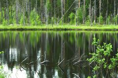 Beautiful small lake in the green fresh forest. Beautiful small lake in the forest with reflections on water stock image