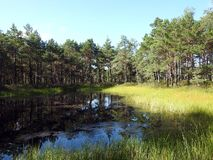Beautiful small lake and plants in Aukstumalos swamp, Lithuania stock image