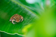 Baby frog Stock Images