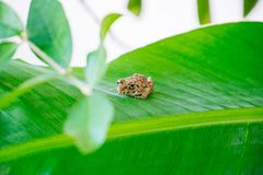 Baby frog Royalty Free Stock Photo