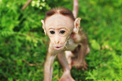 Beautiful small monkey Stock Photography