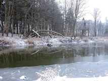 River Sysa and snowy trees in winter, Lithuania Royalty Free Stock Images