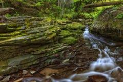 Beautiful small stream Stock Image