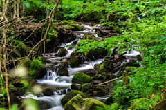 Beautiful small waterfall in Alsace forest Royalty Free Stock Images