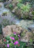 Beautiful small waterfalls Stock Photos
