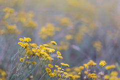 Beautiful small wild flowers Stock Photography